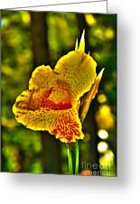 Canna Wow Greeting Card by Kim Pate