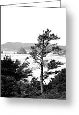 Cannon Beach Greeting Card by David Patterson