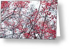 Canopy Trees Greeting Card by Priska Wettstein