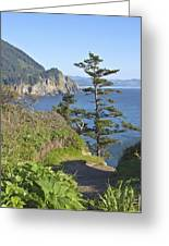 Cape Falcon Viewpoint Oregon Coast. Greeting Card by Gino Rigucci