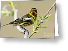 Cape May Warbler Greeting Card by Larry Ricker