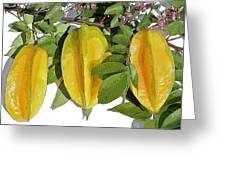 Carambolas Starfruit Three Up Greeting Card by Olivia Novak