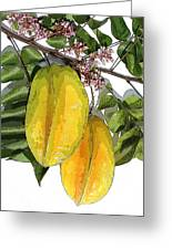 Carambolas Starfruit Two Up Greeting Card by Olivia Novak