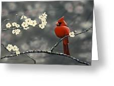 Cardinal And Blossoms Greeting Card by Peter Mathios