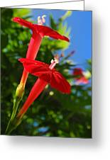 Cardinal Climber Flowers Greeting Card by Christina Rollo