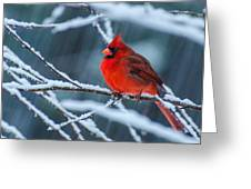 Cardinal In A Storm  Greeting Card by John Harding Photography