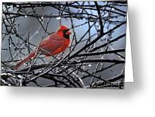 Cardinal In The Rain   Greeting Card by Nava  Thompson