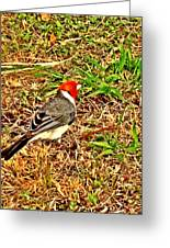 Cardinal In Thought Greeting Card by Tiffany Baltrus