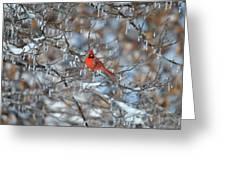 Cardinal In Winter Greeting Card by Cim Paddock