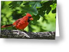 Cardinal Red Greeting Card by Christina Rollo