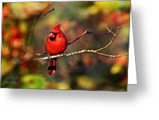 Cardinal Territory Greeting Card by Christina Rollo