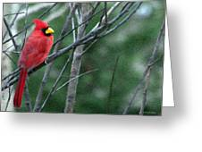 Cardinal West Greeting Card by Jeff Kolker