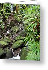 Caribbean Cruise - Dominica - 1212247 Greeting Card by DC Photographer