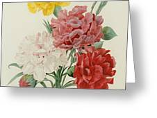 Carnations From Choix Des Plus Belles Fleures Greeting Card by Pierre Joseph Redoute