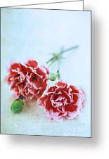Carnations Greeting Card by Stephanie Frey