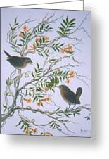 Carolina Wren And Jasmine Greeting Card by Ben Kiger