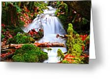 cascade creek Greeting Card by Randy Giesbrecht