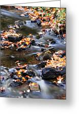 Cascading Autumn Leaves On The Miners River Greeting Card by Optical Playground By MP Ray