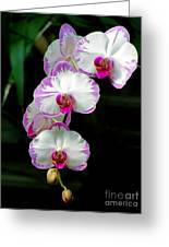 Cascading Orchid Beauties Greeting Card by Sue Melvin