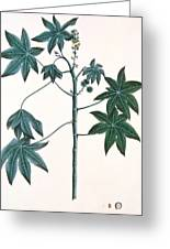 Castor Oil Plant Greeting Card by Indian School