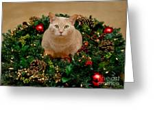 Cat And Christmas Wreath Greeting Card by Amy Cicconi