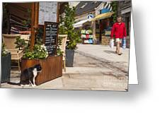 Cat And Restaurant Concarneau Brittany France Greeting Card by Colin and Linda McKie
