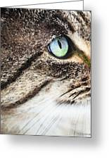 Cat Art - Looking For You Greeting Card by Sharon Cummings