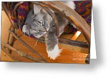Cat Asleep In A Wooden Rocking Chair Greeting Card by Louise Heusinkveld