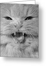 Cat Close-up Greeting Card by Richard Frieman