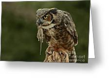 Catch Of The Day - Great Horned Owl  Greeting Card by Inspired Nature Photography By Shelley Myke