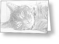 Cat's Eye Greeting Card by J D Owen