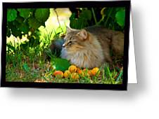 Cat's Mountain Summer Greeting Card by Susanne Still