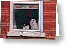 Cats On A Sill Greeting Card by Randi Shenkman