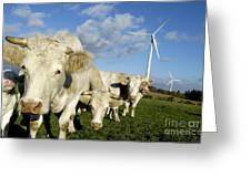 Cattle Greeting Card by Bernard Jaubert