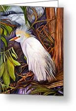 Cattle Egret Greeting Card by Elaine Hodges