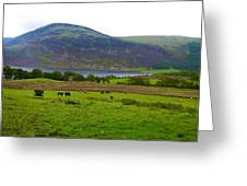 Cattle Grazing At Buttermere Greeting Card by Joan-Violet Stretch