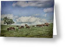 Cattle Grazing Greeting Card by Jeff Swanson