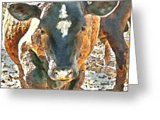 Cattle Round Up Greeting Card by Artist and Photographer Laura Wrede