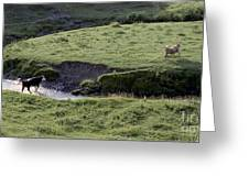 Cattle Running Greeting Card by Andre Paquin