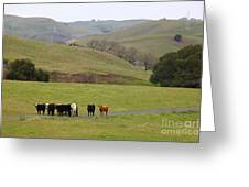 Cattles At Fernandez Ranch California - 5d21062 Greeting Card by Wingsdomain Art and Photography