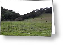 Cattles At Fernandez Ranch California - 5d21104 Greeting Card by Wingsdomain Art and Photography