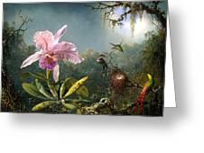 Cattleya Orchid And Three Brazilian Hummingbirds Greeting Card by Emile Munier
