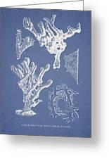 Ceratodictyon Spongiosum Zanard Greeting Card by Aged Pixel