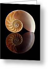 Chambered Nautilus Greeting Card by Jim Hughes