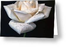 Champagne Rose Flower Macro Greeting Card by Jennie Marie Schell