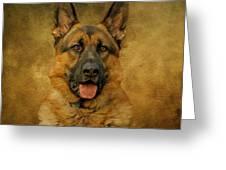 Chance - German Shepherd Greeting Card by Sandy Keeton