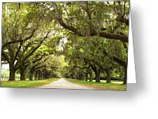 Charleston Avenue Of Oaks Greeting Card by Stephanie McDowell