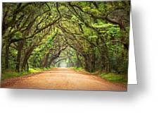 Charleston Sc Edisto Island - Botany Bay Road Greeting Card by Dave Allen