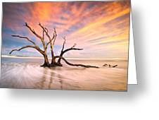 Charleston Sc Sunset Folly Beach Trees - The Calm Greeting Card by Dave Allen