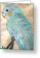 Cheerful Blue Parrot  Greeting Card by Anne-Elizabeth Whiteway